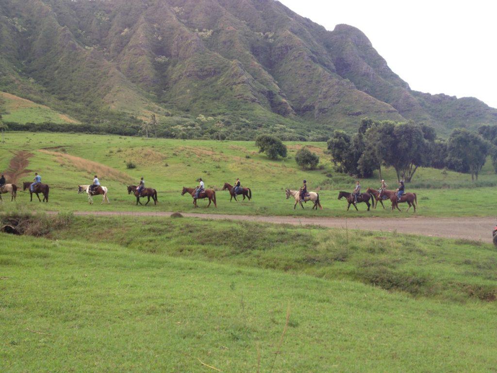 クアロア牧場の馬