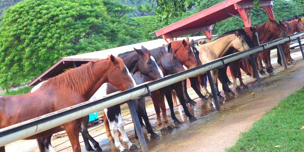 クアロアの馬