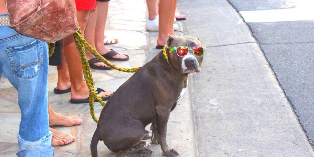 ハワイの犬